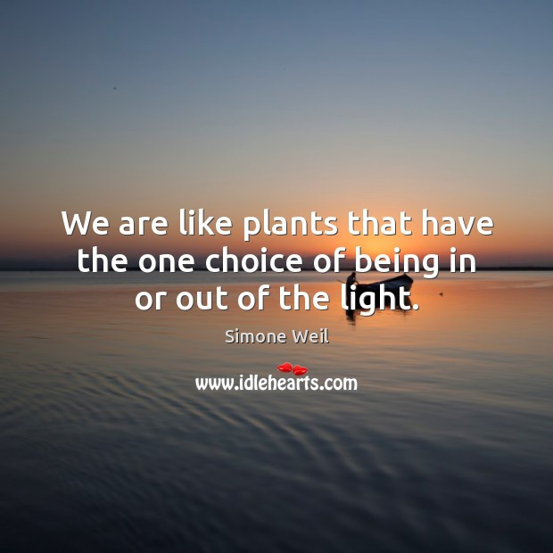 We are like plants that have the one choice of being in or out of the light. Simone Weil Picture Quote