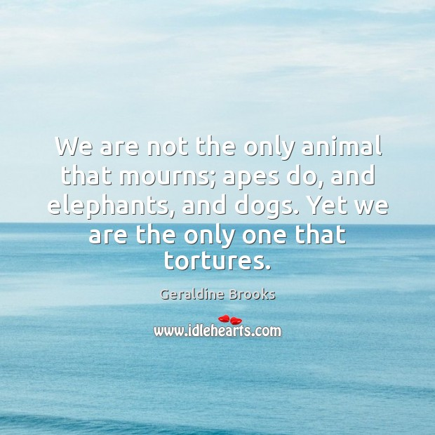 Image, We are not the only animal that mourns; apes do, and elephants,