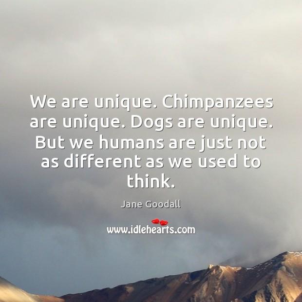 We are unique. Chimpanzees are unique. Dogs are unique. But we humans Jane Goodall Picture Quote