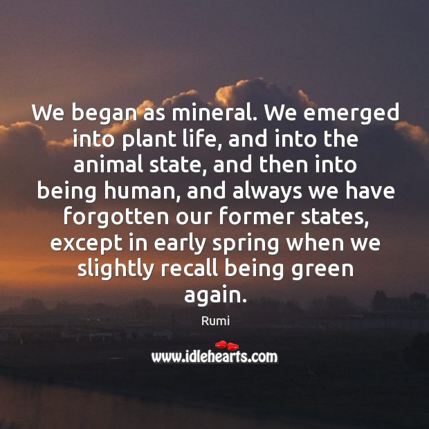 We began as mineral. We emerged into plant life, and into the Image