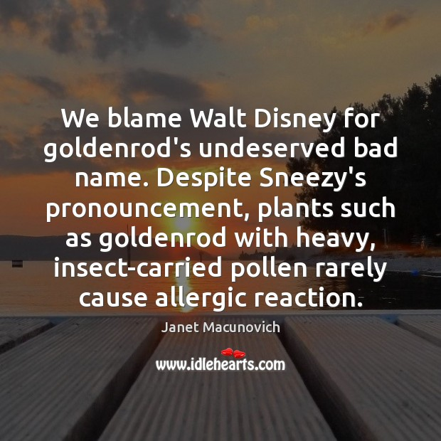 We blame Walt Disney for goldenrod's undeserved bad name. Despite Sneezy's pronouncement, Janet Macunovich Picture Quote