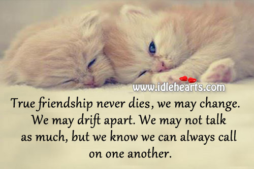 Image, True friendship never dies.