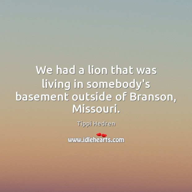 We had a lion that was living in somebody's basement outside of Branson, Missouri. Image