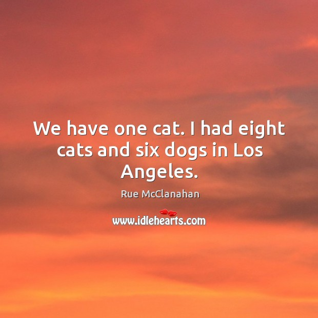 We have one cat. I had eight cats and six dogs in los angeles. Image