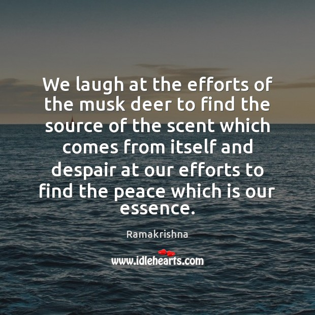 We laugh at the efforts of the musk deer to find the Image