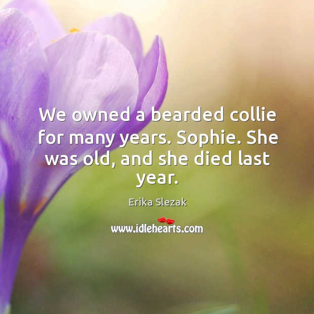 We owned a bearded collie for many years. Sophie. She was old, and she died last year. Image
