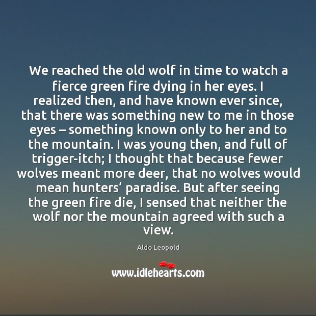 We reached the old wolf in time to watch a fierce green Image