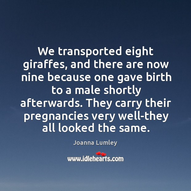 We transported eight giraffes, and there are now nine because one gave birth to a male shortly afterwards. Joanna Lumley Picture Quote