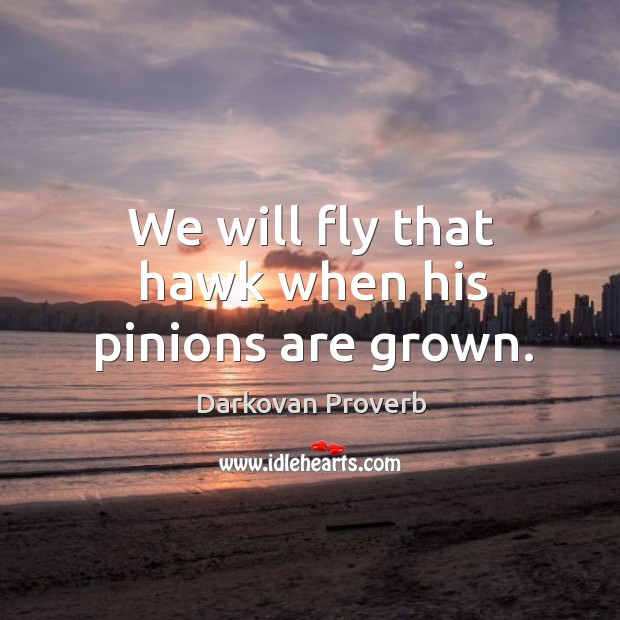 Image, We will fly that hawk when his pinions are grown.