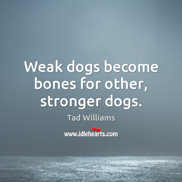 Weak dogs become bones for other, stronger dogs. Image