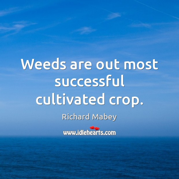 Weeds are out most successful cultivated crop. Image