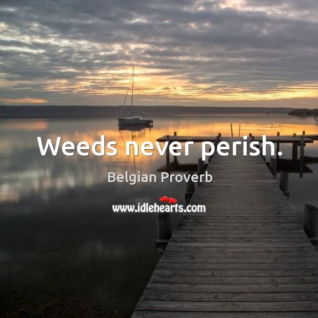 Image, Weeds never perish.