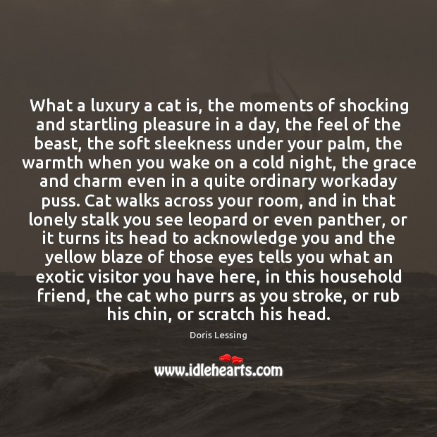 What a luxury a cat is, the moments of shocking and startling Doris Lessing Picture Quote