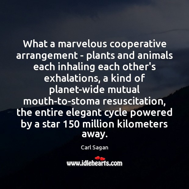 Image, What a marvelous cooperative arrangement – plants and animals each inhaling each