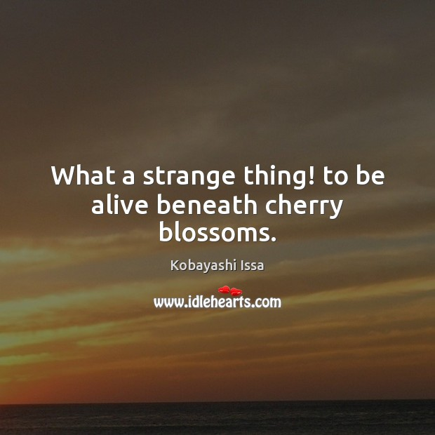 What a strange thing! to be alive beneath cherry blossoms. Image
