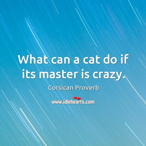 What can a cat do if its master is crazy. Image