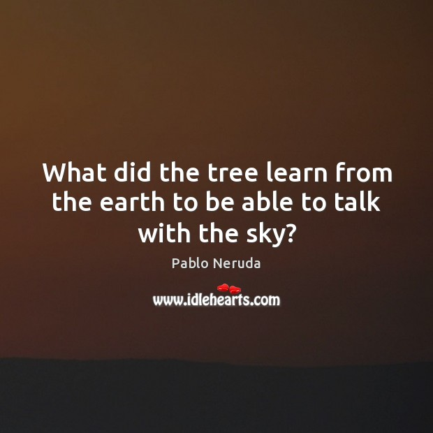 Image, What did the tree learn from the earth to be able to talk with the sky?