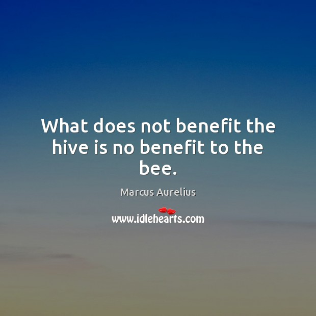 What does not benefit the hive is no benefit to the bee. Image