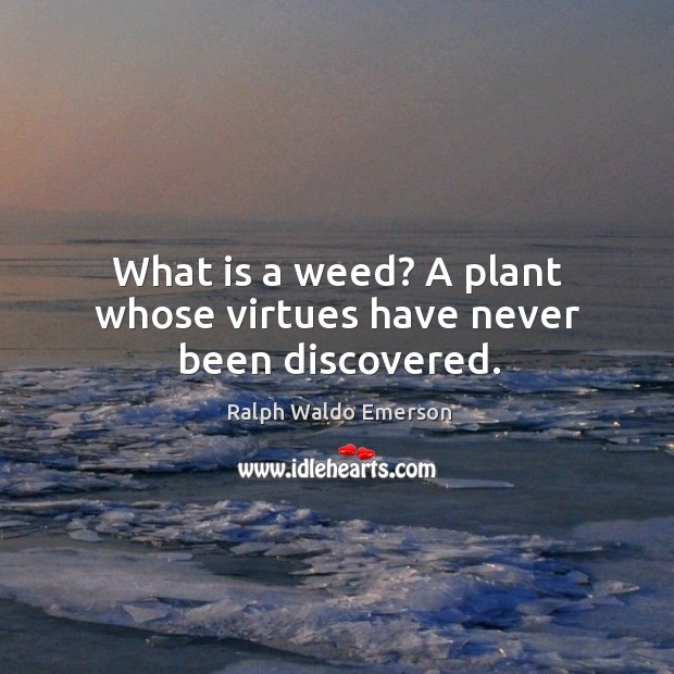 What is a weed? a plant whose virtues have never been discovered. Image
