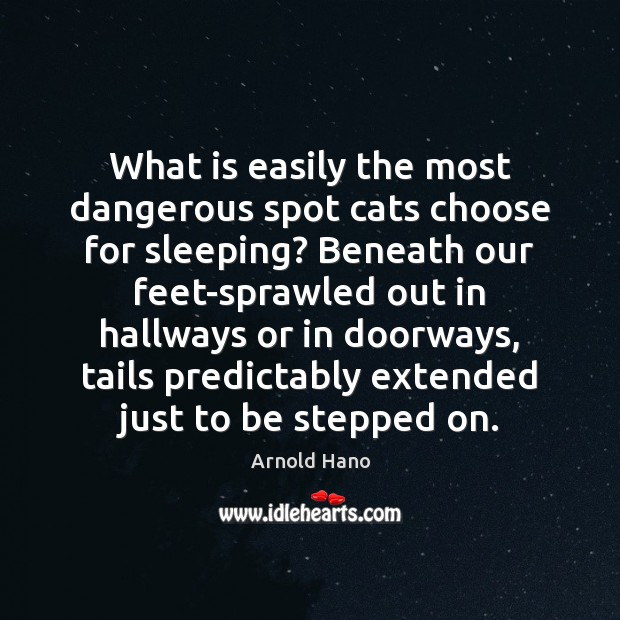 Image, What is easily the most dangerous spot cats choose for sleeping? Beneath