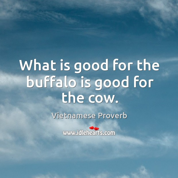 What is good for the buffalo is good for the cow. Vietnamese Proverbs Image