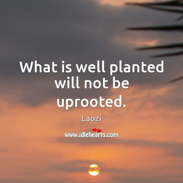 Image, What is well planted will not be uprooted.