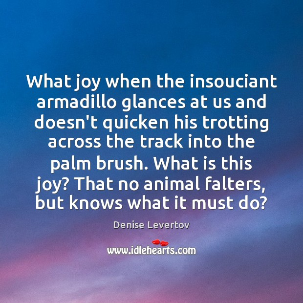 Image, What joy when the insouciant armadillo glances at us and doesn't quicken