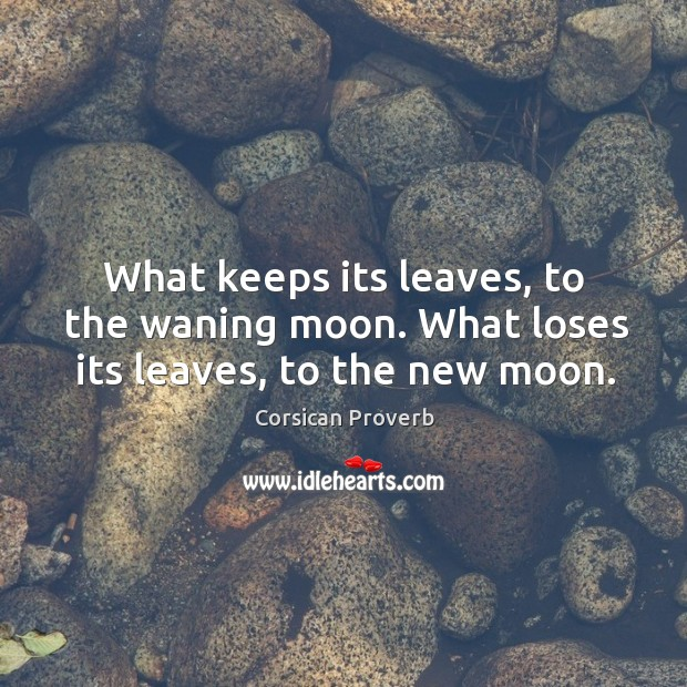 What keeps its leaves, to the waning moon. What loses its leaves, to the new moon. Image