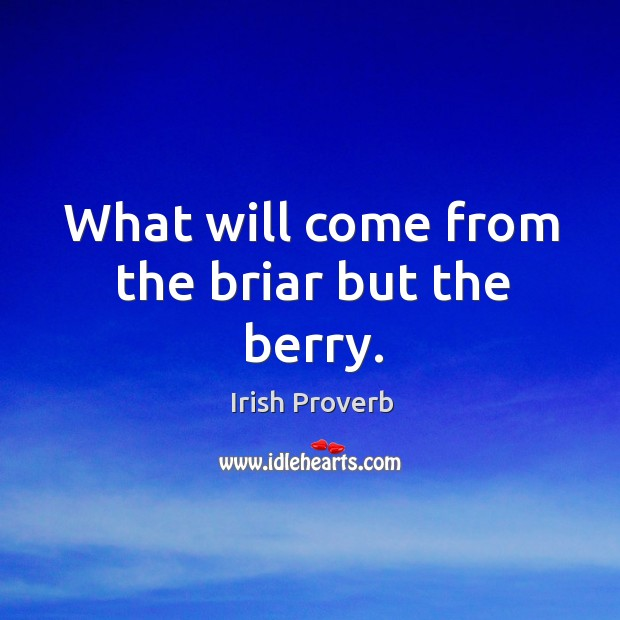 What will come from the briar but the berry. Irish Proverbs Image