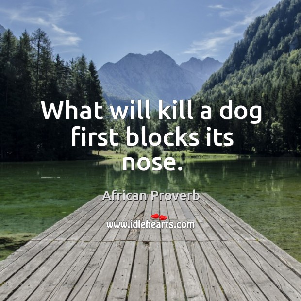Image, What will kill a dog first blocks its nose.