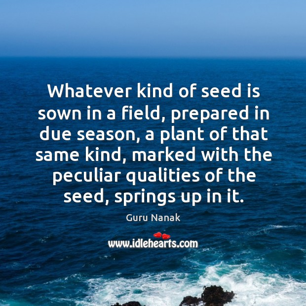 Whatever kind of seed is sown in a field, prepared in due season Image