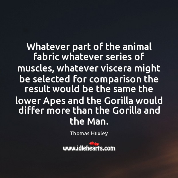 Whatever part of the animal fabric whatever series of muscles, whatever viscera Thomas Huxley Picture Quote