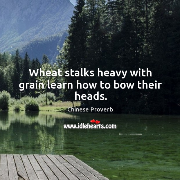 Wheat stalks heavy with grain learn how to bow their heads. Image