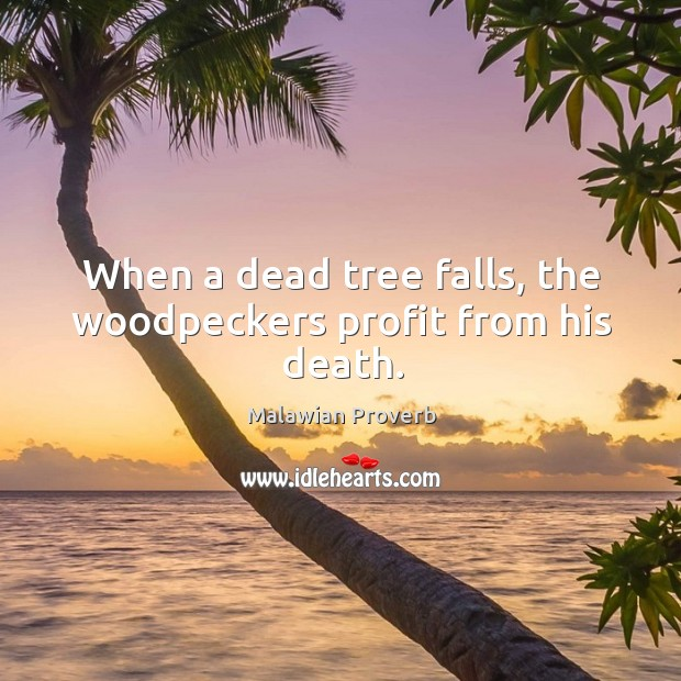 When a dead tree falls, the woodpeckers profit from his death. Malawian Proverbs Image