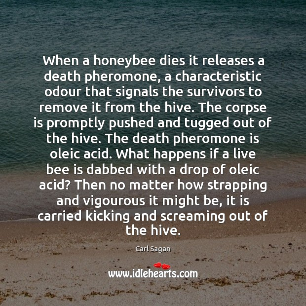 When a honeybee dies it releases a death pheromone, a characteristic odour Carl Sagan Picture Quote