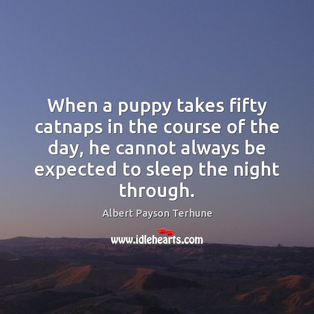 Image, When a puppy takes fifty catnaps in the course of the day,