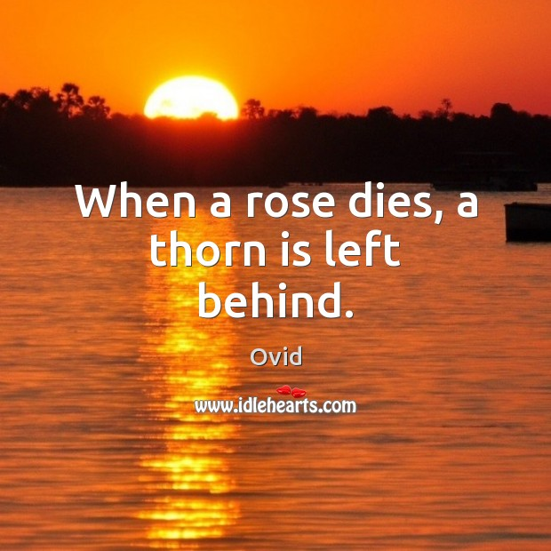 When a rose dies, a thorn is left behind. Image