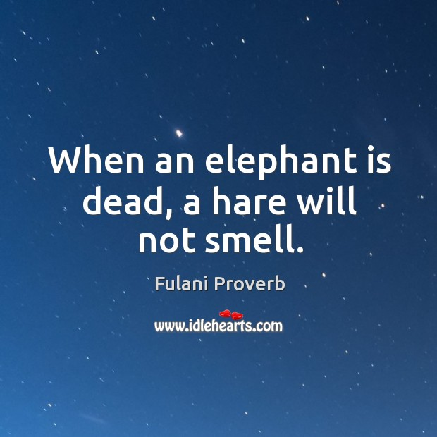 Image, When an elephant is dead, a hare will not smell.