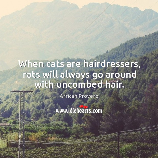 Image, When cats are hairdressers, rats will always go around with uncombed hair.