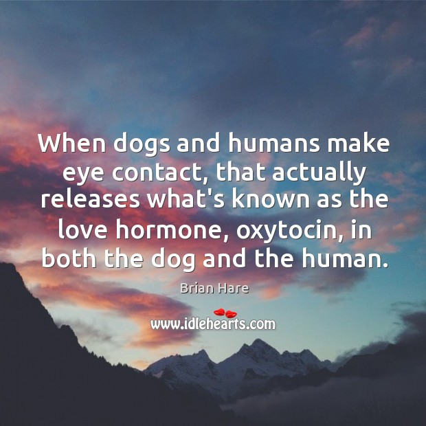 Image, When dogs and humans make eye contact, that actually releases what's known