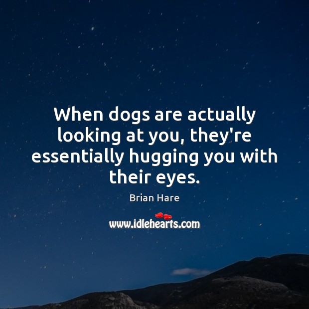Image, When dogs are actually looking at you, they're essentially hugging you with their eyes.