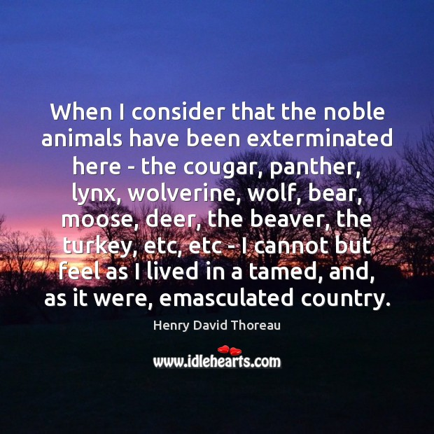 Image, Animal, Animals, Bear, Bears, Beaver, Beavers, Been, Cannot, Consider, Cougars, Country, Deer, Etc, Feel, Feels, Funny, Has Beens, Here, Lived, Moose, Noble, Panther, Panthers, Tamed, Turkey, Turkeys, Were, Wolf, Wolverine