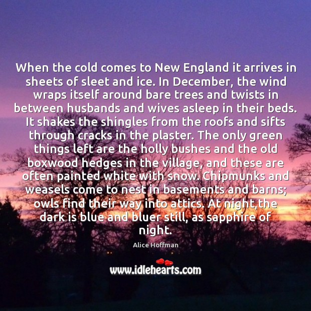 When the cold comes to New England it arrives in sheets of Alice Hoffman Picture Quote