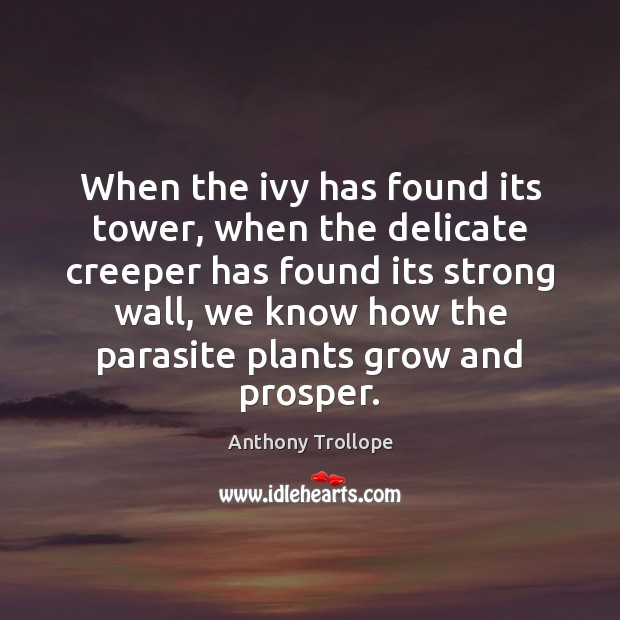 When the ivy has found its tower, when the delicate creeper has Anthony Trollope Picture Quote