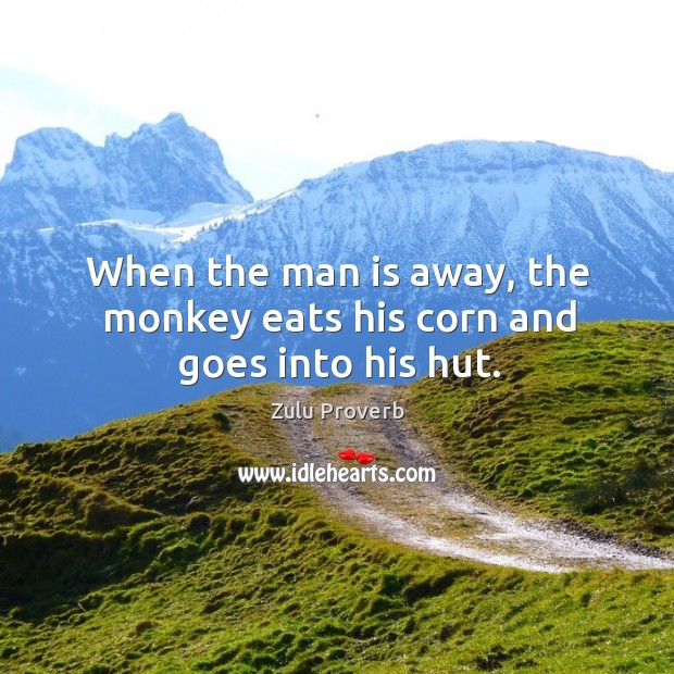 Image, When the man is away, the monkey eats his corn and goes into his hut.