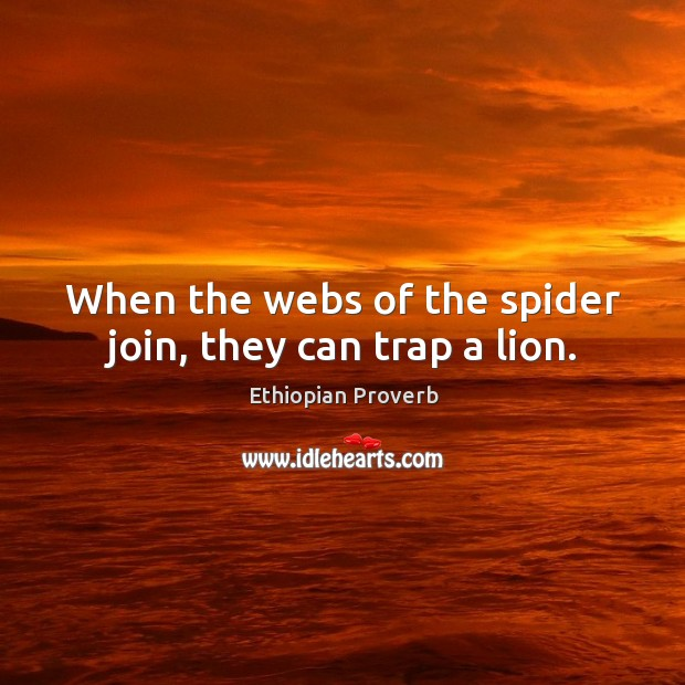 When the webs of the spider join, they can trap a lion. Ethiopian Proverbs Image
