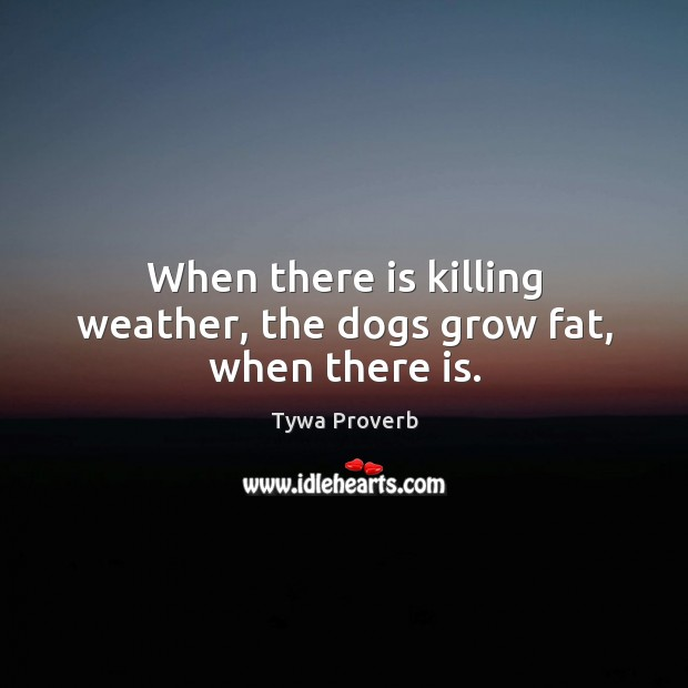 When there is killing weather, the dogs grow fat, when there is. Tywa Proverbs Image
