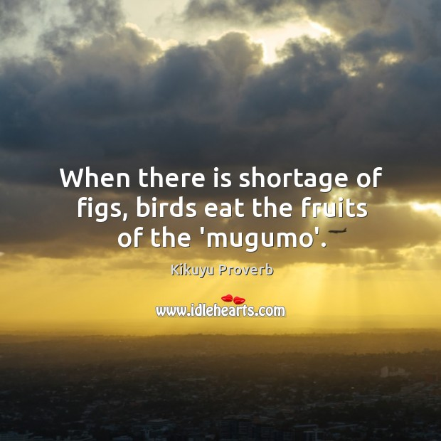 When there is shortage of figs, birds eat the fruits of the 'mugumo'. Kikuyu Proverbs Image