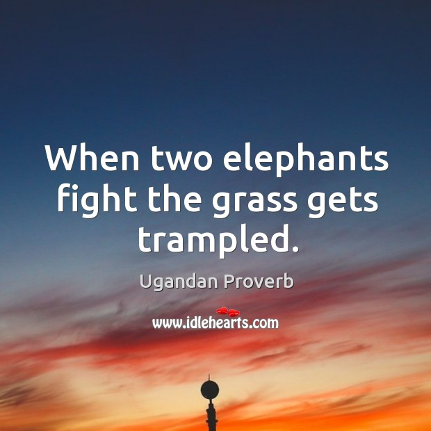 Image, When two elephants fight the grass gets trampled.
