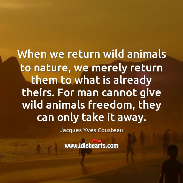 Jacques Yves Cousteau Picture Quote image saying: When we return wild animals to nature, we merely return them to